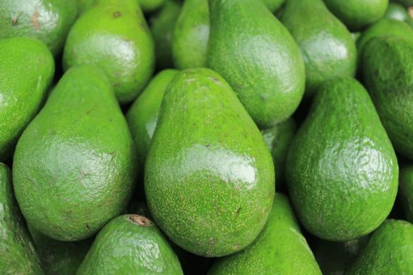 Dennis Stolpner avocado